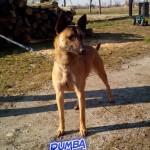 Rumba 5