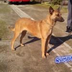 Rumba 6