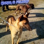Rumba & Felicity 1