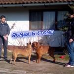 Rumba & Stone